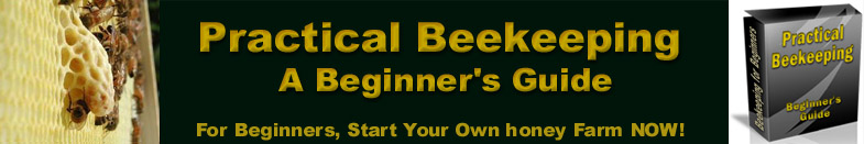 Bees and honey and Beginner's Guide