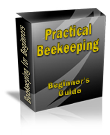 Practical Beekeeping in a Box