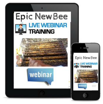 Epic Bee Video Webinars